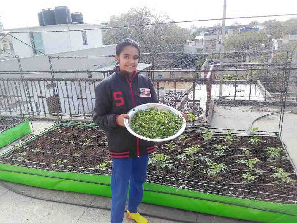 organic farming on roof