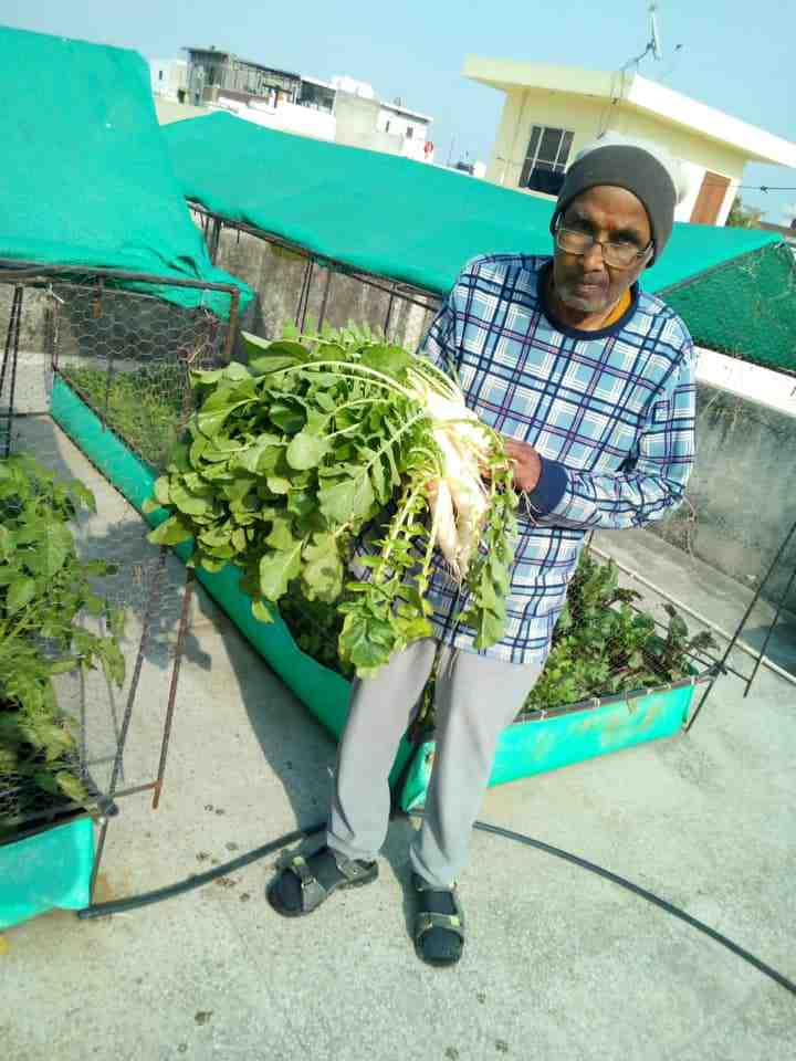organic farming in home