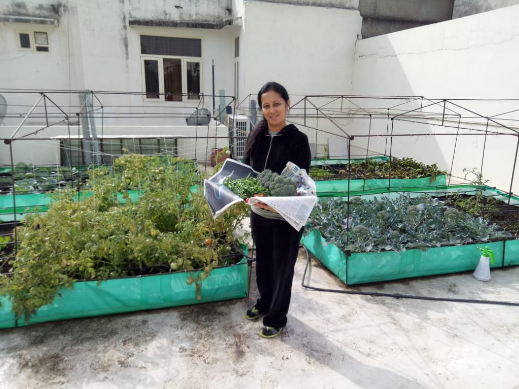 My Organic Vegetables from my Rooftop