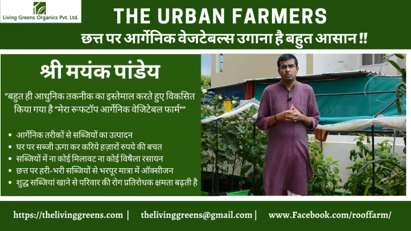 Growing Popularity of Rooftop Farming