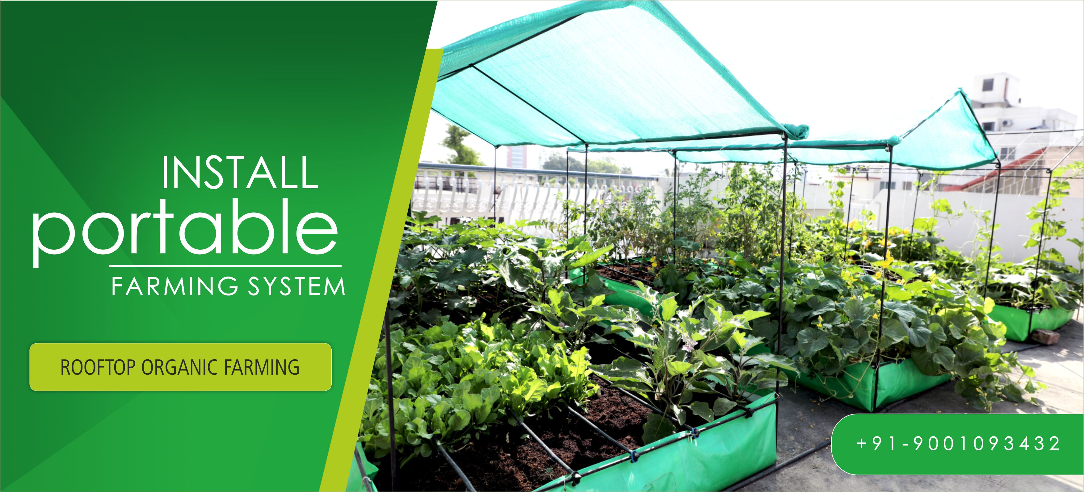 Organic Farming In Jaipur Rooftop Kitchen Garden Thelivinggreens Com